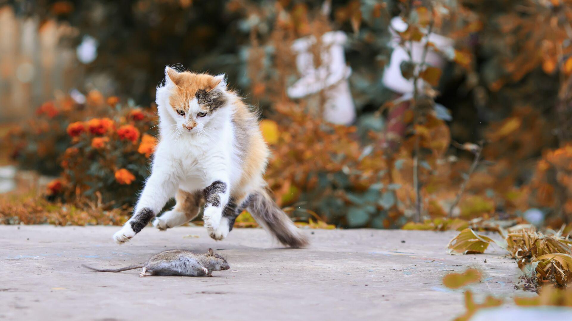 """Два удовольствия: почему кошки никогда не смогут """"завоевать мир"""""""