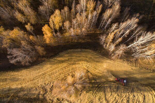 Уборка урожая яровой пшеницы в Новосибирской области