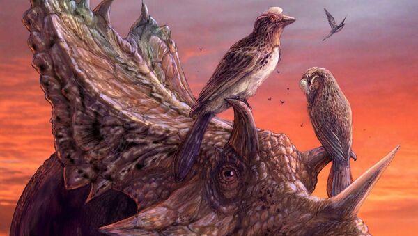 Древние птицы-мирарки, научившиеся летать отдельно от предков современных пернатых