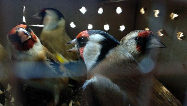 Птицы, обнаруженные в багаже граждан Молдавии на брянской таможне