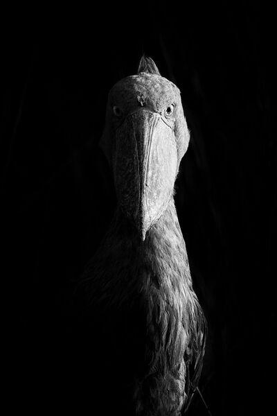 Работа победителя конкурса Nature Photographer of The Year 2018. Dvir Barkay