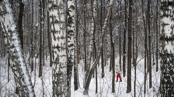 Женщина катается на лыжах в лесу. Архивное фото