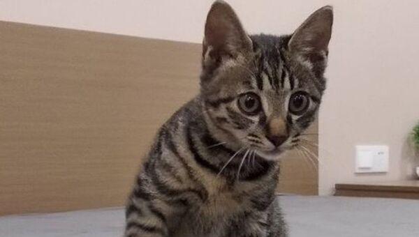 Котенок по кличке Ёши, который ожидает отправки из Китая в Новосибирск