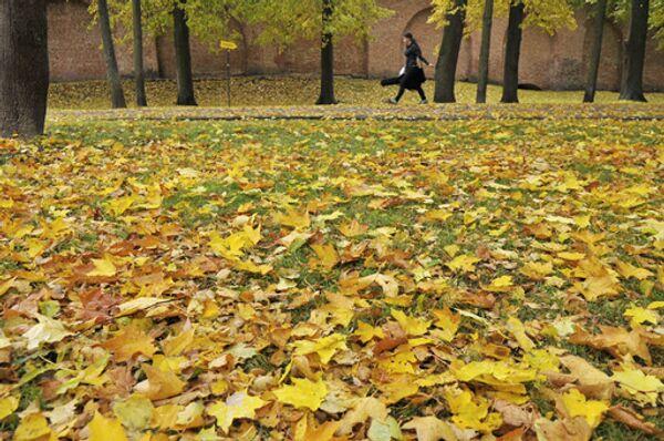 Опавшие листья не будут убирать с московских газонов. Архив