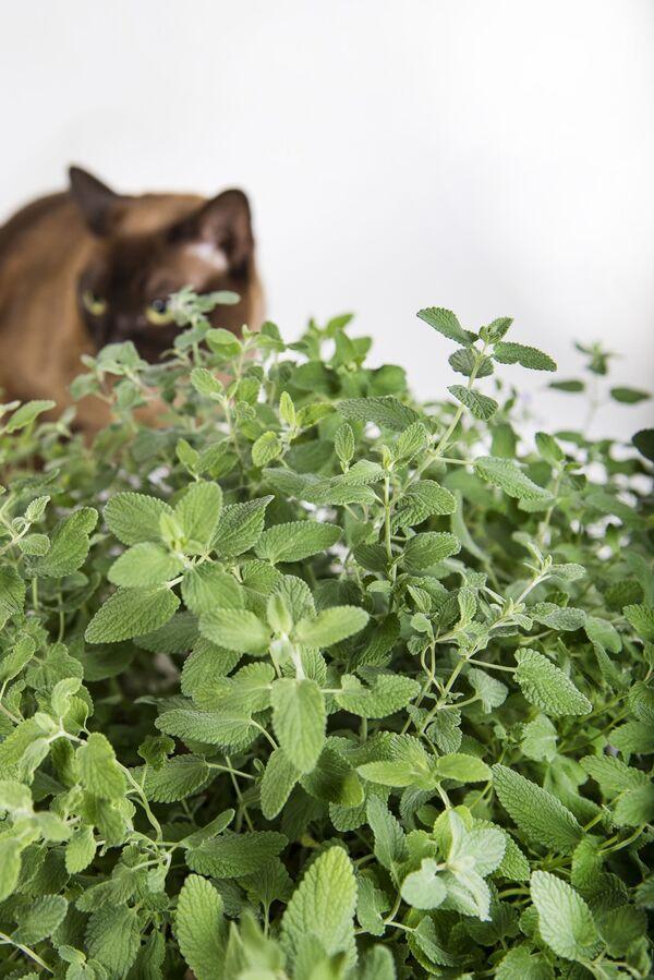 Коты-наркоманы и гусеницы-каннибалы. Кто и зачем зомбирует животных