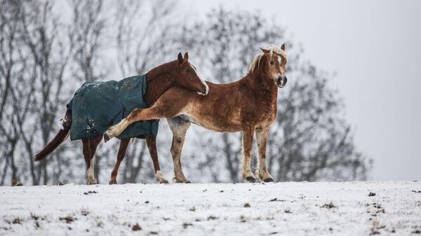Лошади в Германии