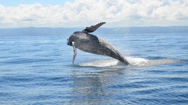 Японский кит — Википедия | 338x600