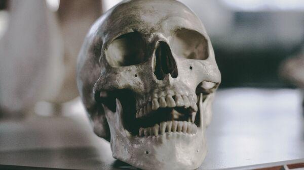 В Бельгии обнаружили стены из человеческих черепов и костей