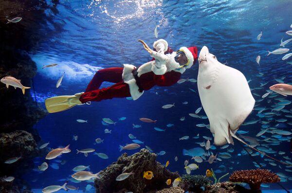 Дайвер в костюме Санта-Клауса плавает во время подводного представления в аквариуме Саншайн в Токио
