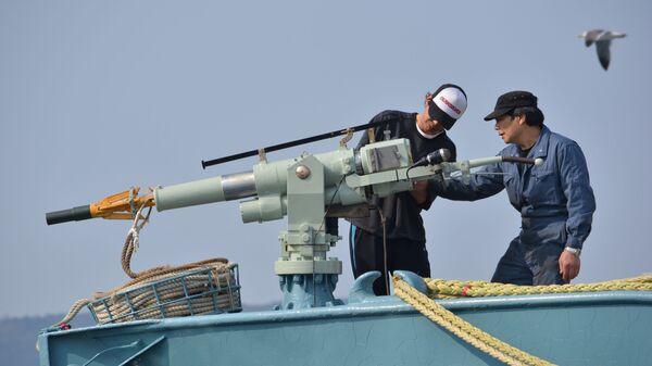 Япония впервый раз за30 лет планирует восстановить коммерческий китобойный промысел