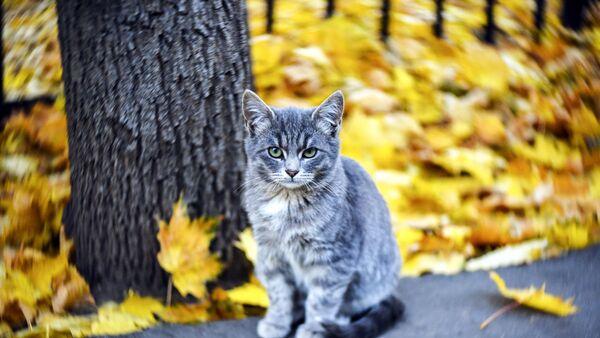 """Проект """"Котошеф"""" ищет волонтеров для проекта помощи уличным кошкам"""