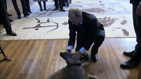 Президент Сербии подарил Путину щенка шарпланинской овчарки