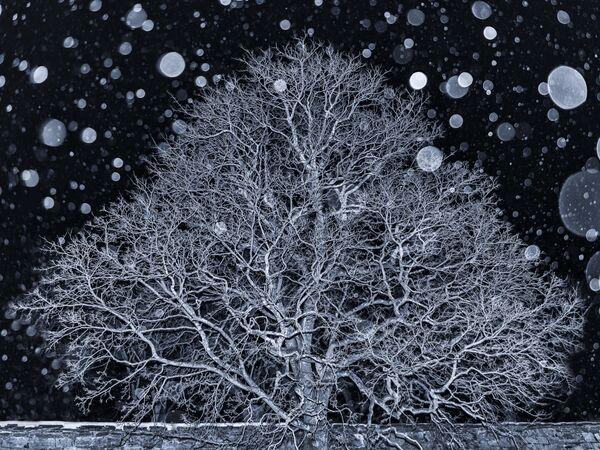 Работа фотографа Ann Kristin Lindaas. Конкурс фотографии The International Landscape Photographer of the Year 2018