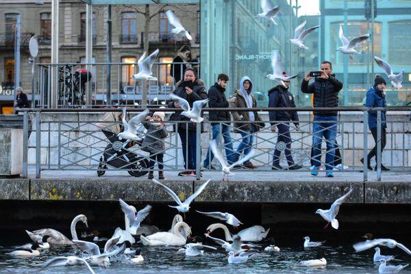 Люди кормят птиц на одной из улиц Женевы