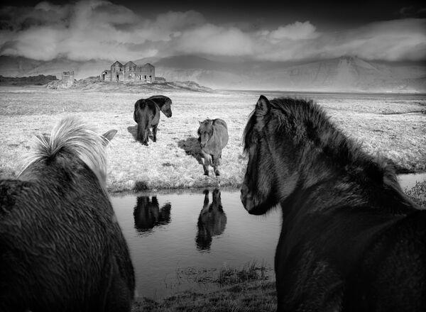 Baerbel  Brechtel. Первое место национальной номинации фотоконкурса Sony World Photography Awards 2019
