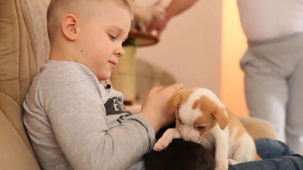 Не могу оставить их на улице! Как мальчик Ваня спасает бездомных животных