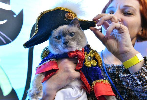 Кошка в костюме Наполеона Бонапарта участвует в конкурсе Кошка в одежке на выставке Кэтсбург