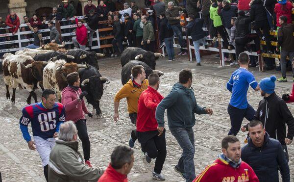 Люди бегут вместе с быками по улицам во время Карнавала дель Торо в Сьюдад-Родриго