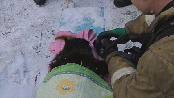 Смоленские спасатели откачали вынесенного из пожара кота