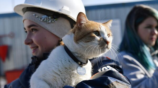 Кот по кличке Мостик