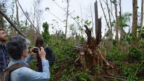 Ураган Мария уничтожил примерно половину лесов Пуэрто-Рико