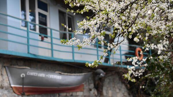 Цветущее дерево в Алупке
