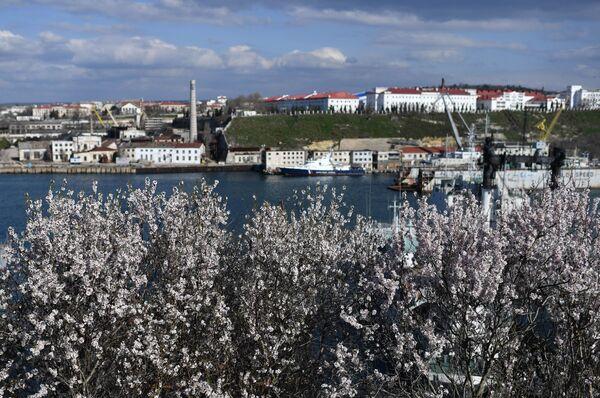 Цветущие деревья у Севастопольской бухты