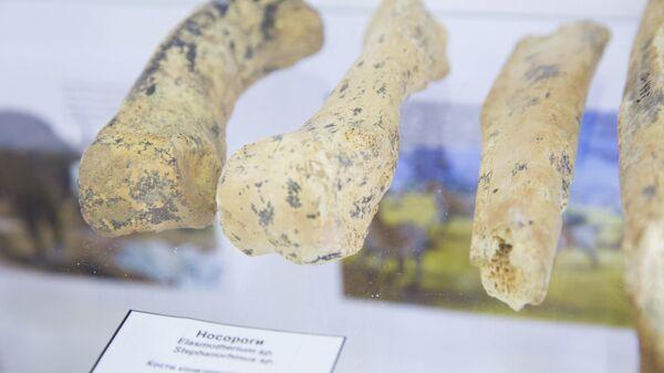 В Красноярске нашли кости животных эпохи палеолита