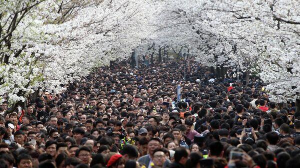 Люди гуляют под цветущими сакурами в Нанкине, провинция Цзянсу, Китай
