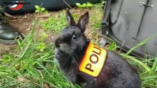 Скриншот видео про службу кроликов в полиции Франции