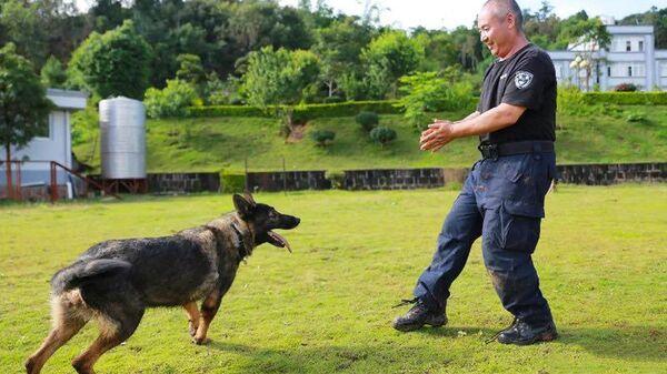 Полицейская собака Хуахуанма