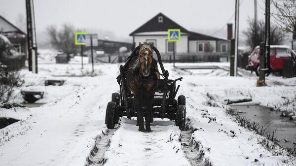 Лошадиная упряжка в деревне Аполлоновка