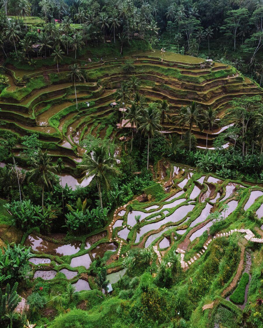 Бали. Рисовые террасы
