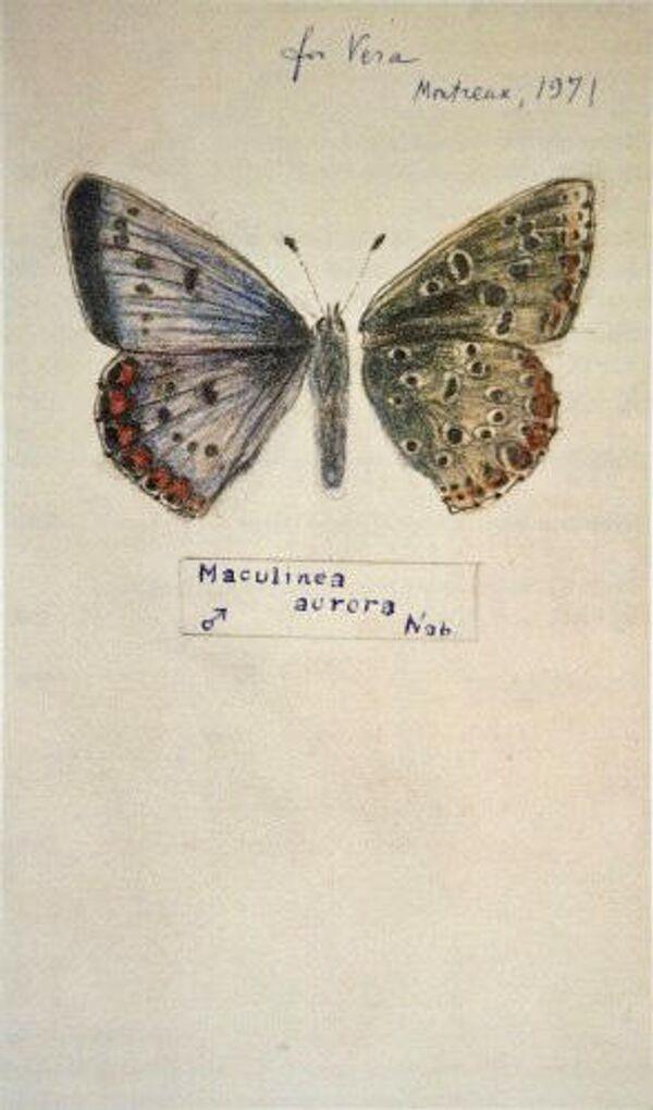 Рисунок Владимира Набокова