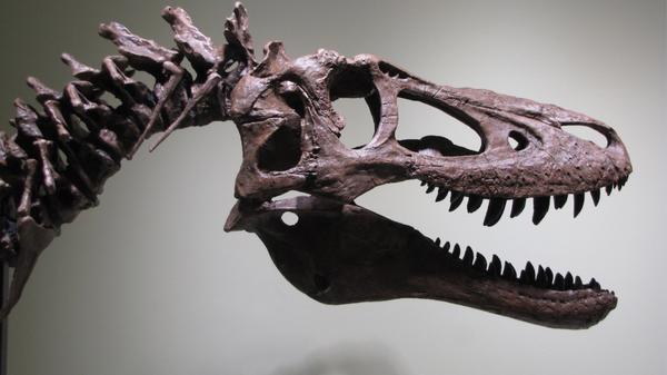 Окаменелости детеныша тираннозавра возрастом более 60 миллионов лет, выставленные на продажу на сайте интернет-аукциона eBay в США