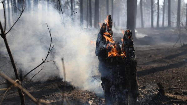 Лесной пожар у поселка Маккавеево Забайкальского края