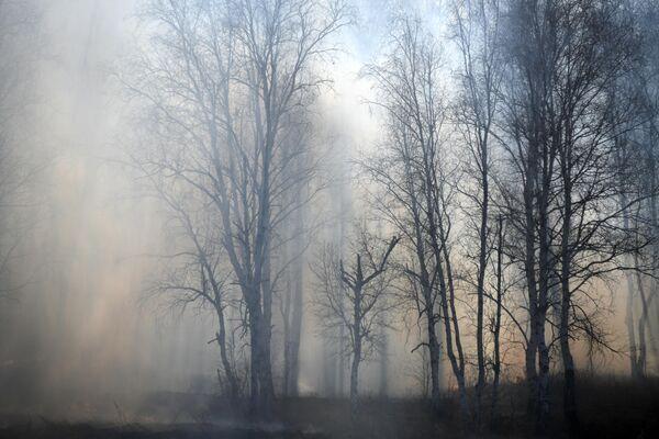 Дым от лесного пожара у поселка Маккавеево Забайкальского края