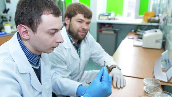 Владимир Оберемок (справа) со своим аспирантом проводит исследования на насекомых