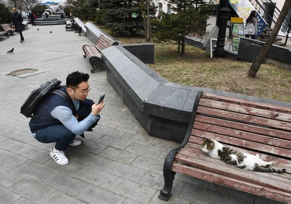 Турист фотографирует кошку на улице Адмирала Фокина во Владивостоке