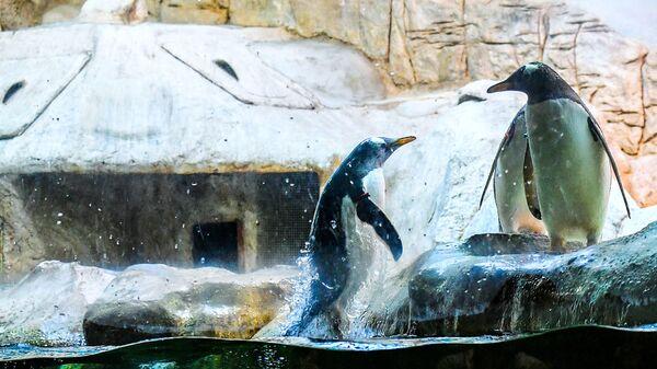 Пингвины в Московском зоопарке