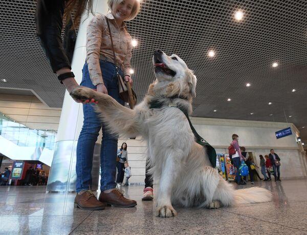 Собака в аэропорту Домодедово