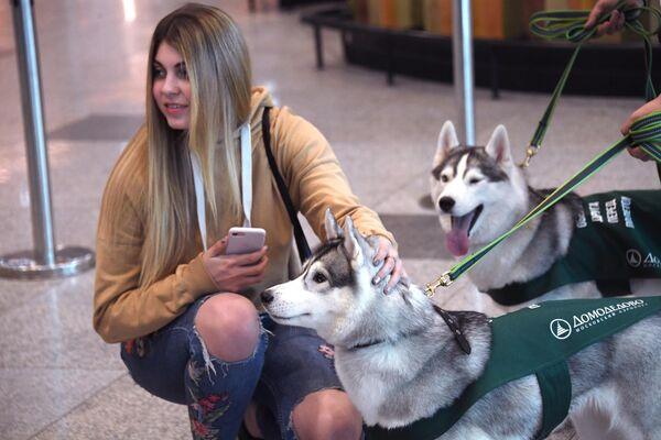 Девушка гладит собаку в аэропорту Домодедово