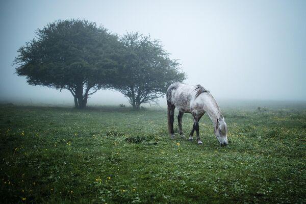 Лошадь пасется на лугу в Майкопском районе Республики Адыгея