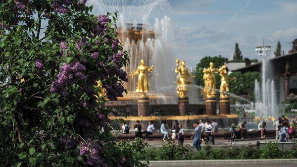 Цветение сирени на ВДНХ в Москве