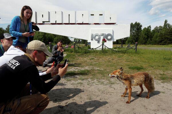 Туристы фотографируют лису в заброшенном городе Припять, недалеко от Чернобыльской АЭС, Украина