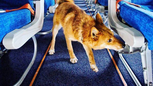 Служебная собака породной группы шалайка