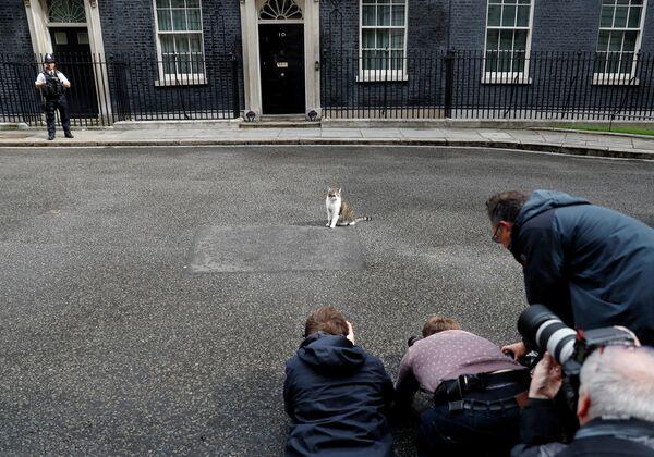 Журналисты фотографируют кота Ларри на Даунинг-стрит в Лондоне