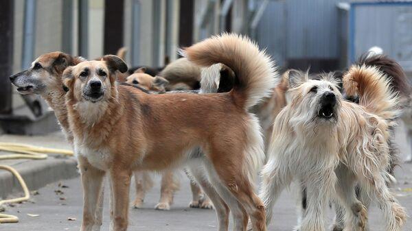 Собаки из приюта для бездомных собак