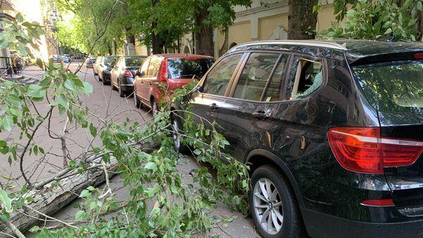 Ветви дерева, поваленного сильным ветром, во дворе района Хамовники в Москве. 4 июля 2019
