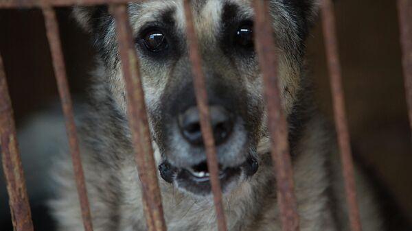 Собака в приюте для бездомных животных